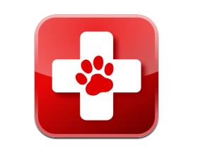 pet-first-aid hurricane care